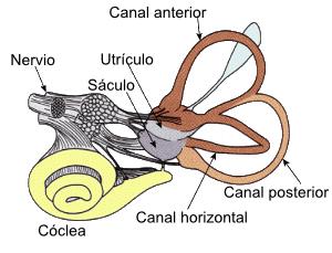 VestibularSystem
