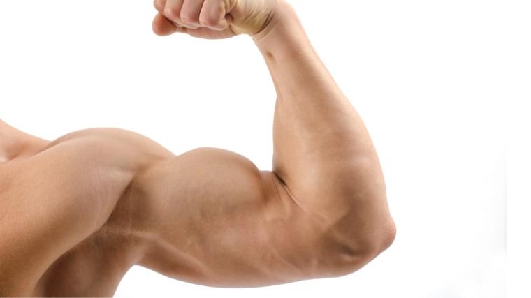 flexed biceps muscle